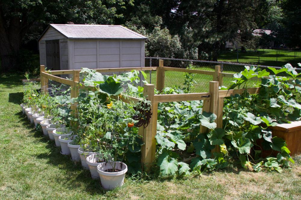 garden-11