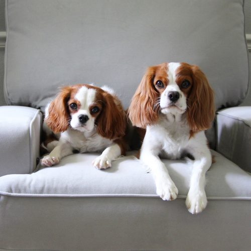 Henry and Sophie   Lumber Loves Lace   lumberloveslace.com